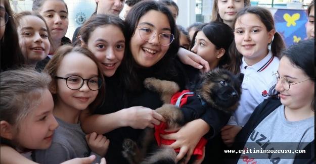 Yavru kurt köpeği öğrencilerin en sadık dostu…