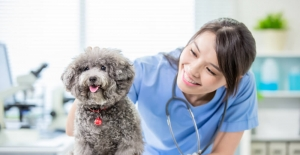 bKadın veteriner hekimlerine STEM yetkinlikleri.../b